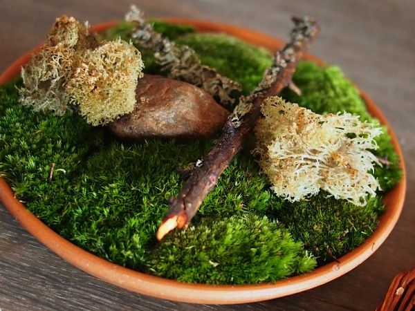 Who knew lichen could be so tasty. Fried to a fragile crisp and sprinkled with cep powder, crunchy umami flavors come alive on the palate.