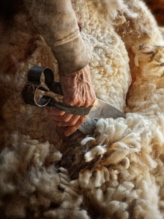 #Campo Dan Routh Photography: Shearing Week 2012 at Rising Meadow