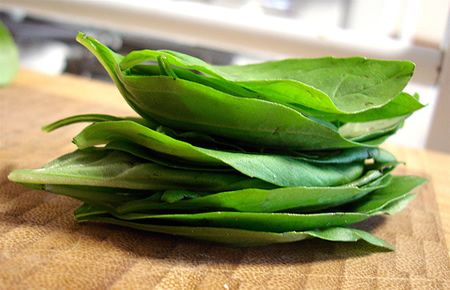 Here's an idea for all your Basil Leaves - Basil Infused Olive Oil