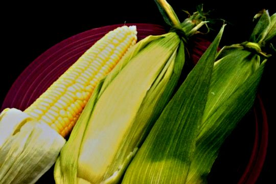 20 fresh corn recipes