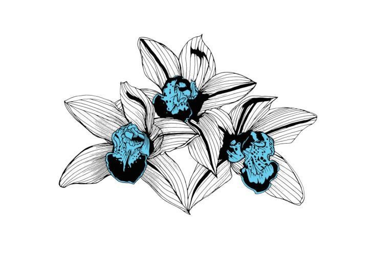 ARTFINDER: Blue Orchids by Bo Lanyon - This trio of Blue Orchids offers a clean and contemporary twist on classical botanical illustration. In a crisp and clear blue, the flowers sit amongst the s...