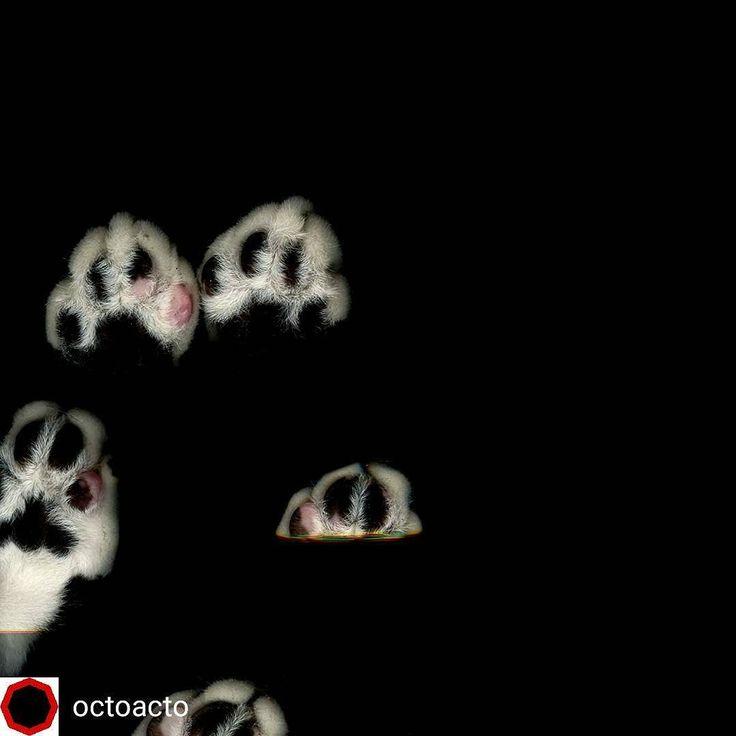 @Regrann_App from @octoacto -  Escanogato por Iván Castiblanco @skiagrafo Julio /2016 #octoactojulio2016 #OctoActo #octoactomesames #documental #Colombia #Argentina #igersbsas #gatos #paws #catsofinstagram - #regrann