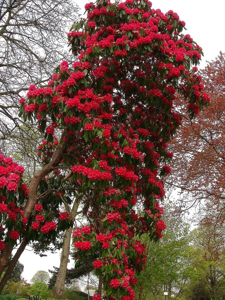 Bright tree.: Sissy Gardens, Parties Ideas, Gardens Parties, Botanical Gardens