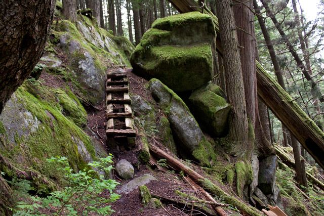 Old wooden steps on the Harrison Grind trail.http://www.vancouvertrails.com/trails/harrison-grind/