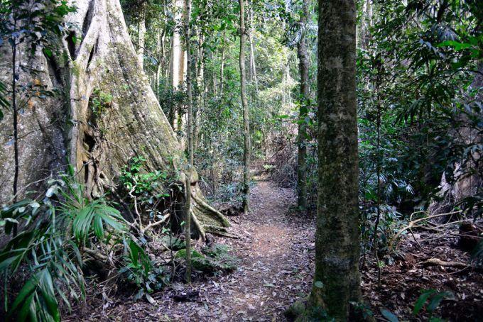 Palm Grove Rainforest Circuit Mt Tamborine   Must do Brisbane