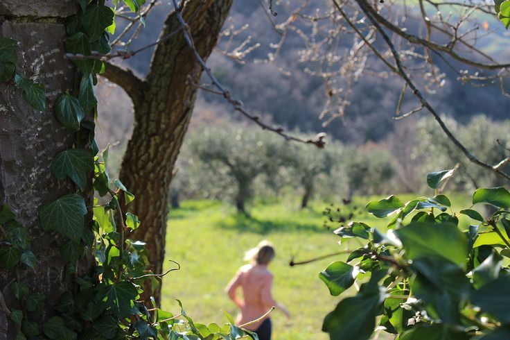 The Wild Bird Retreat grove is a haven for rare birds and has been designated a protected area due to its unique biodiversity. Adopt an olive tree here from £34.99 + shipping. #TerraAdopt #adoptanolivetree