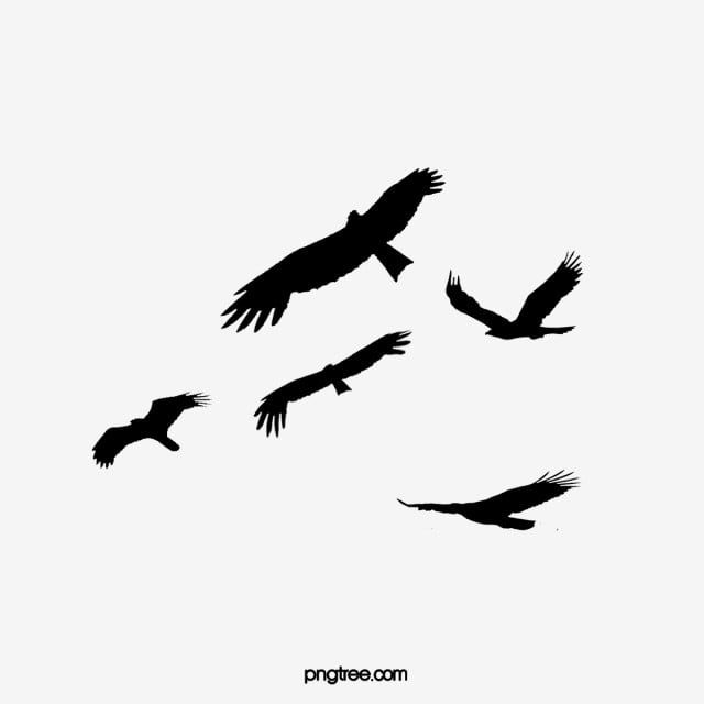 Flying Bird Silhouette Fly Bird Dayan Png Transparent Clipart Image And Psd File For Free Download Flying Bird Silhouette Bird Silhouette Girl Drawing Images