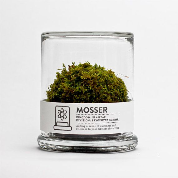 The Mosser is a small glass terrarium filled with a simple round moss ball. The Mosser comes with a glass mister bottle used to feed your plant. They are very easy to care for and only need to be sprayed once every two weeks with filtered water.