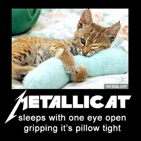 Metallicat - breaking my own rule and pinning something with a grammatical error due to awesomeness.