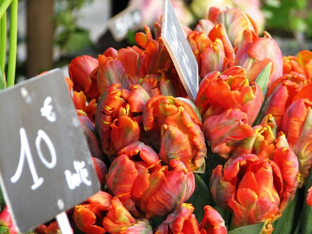 Tulips in a French flower market. :)