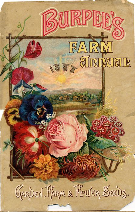 "Burpee's Farm Annual, 1888 ~ The Shakers invented the ""seed packet."" They were the first to package seeds for retail sales."