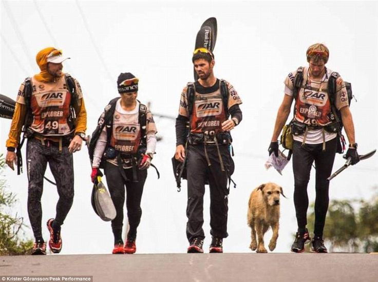 The fifth member: Team Peak Performance walk with stray dog Arthur during a stage of the 4...
