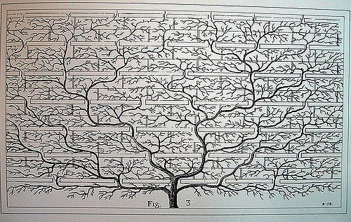 family tree   Something I found in a 2nd hand bookshop. No i…   Flickr