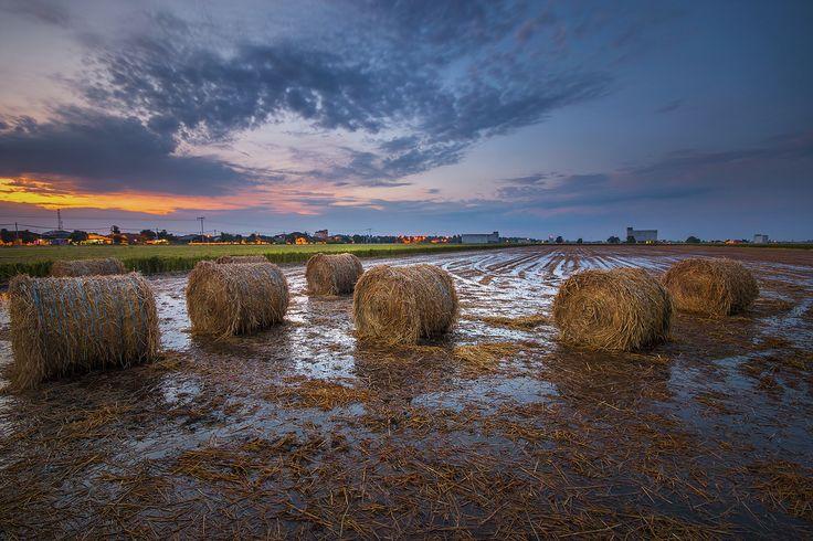 Sekinchan Harvest | by Farizun Amrod Saad