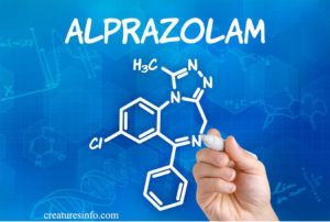 Alprazolam For Dogs And Side Effects