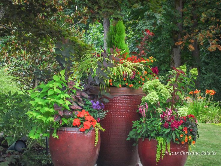 703 Best #Container #Gardening Ideas Images On Pinterest | Pots, Gardening  And Container Plants