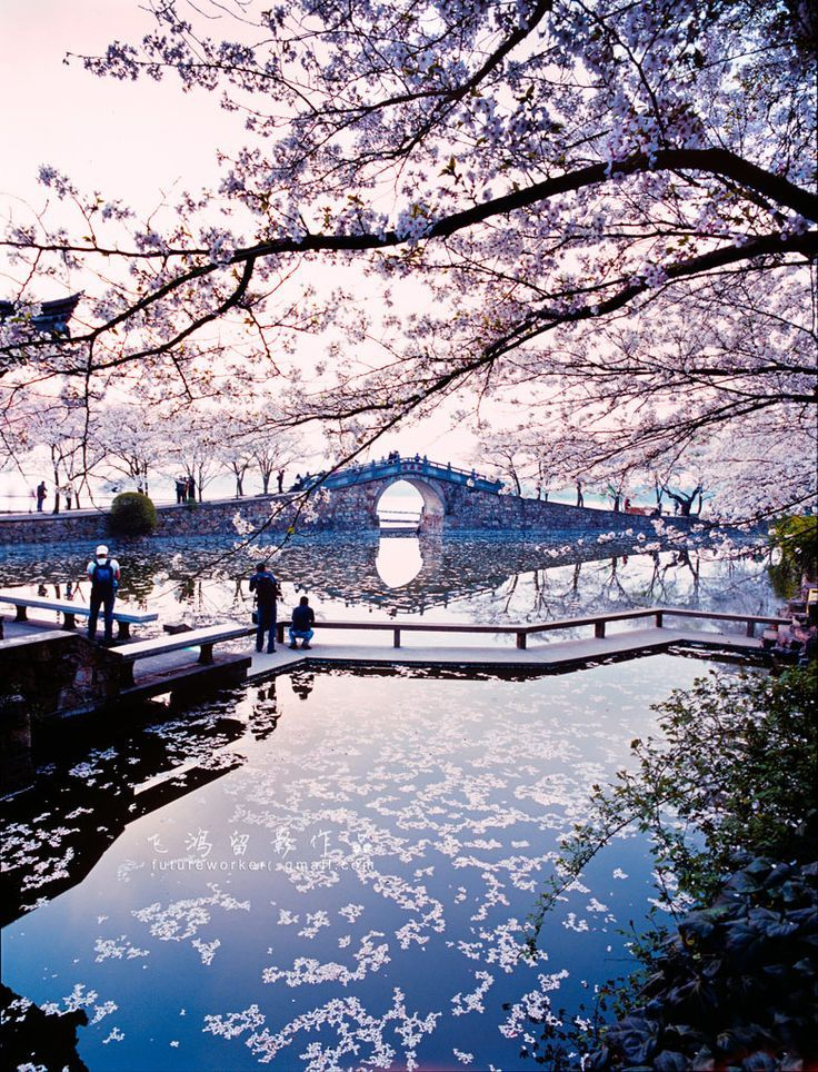 Cherry Blossoms - Yuantouzhu, Wuxi, China