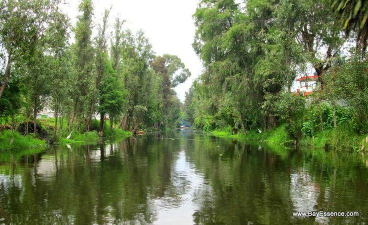 Xochimilco's Floating Gardens   www.bayessence.com