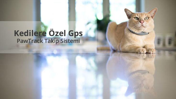 Kedilere Özel GPS