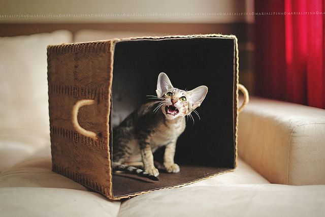 """** """"Hey! Who moveds meez box? Handles or noes handles, leaves it alone where me haz it."""""""