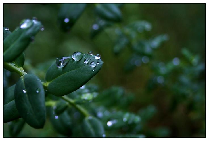Dew drops :D