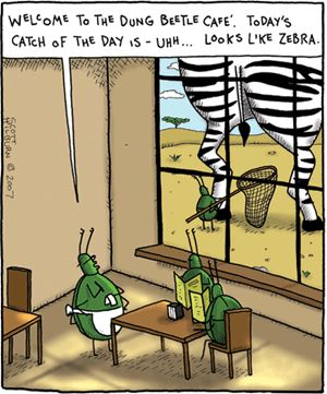 Dung Beetle Comic Google Search Insect Farsides