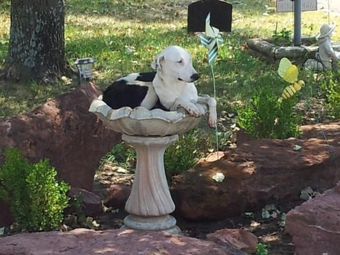 Man Finds Stray Dog In Bird Bath And Keeps Him As New Best