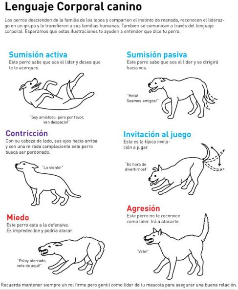 Lenguaje corporal canino                                                                                                                                                                                 Más