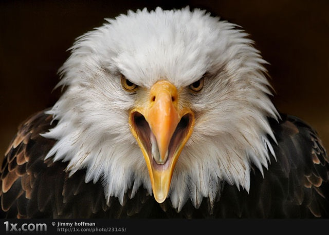 eagles: Eagle, Conservative, Watch, American, I Will, Usa