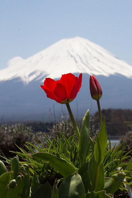 Mount Fuji, Lake Kawaguchi | Yamanashi, Japan | UFOREA.org | The trip you want. The help they need.