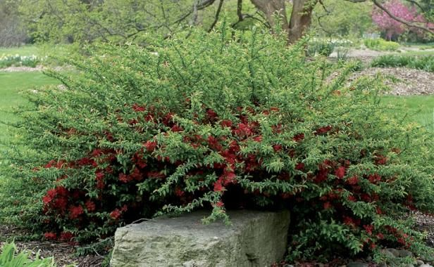 Landscaping Shrubs Crossword : Best images about hillside garden on gardens sun and