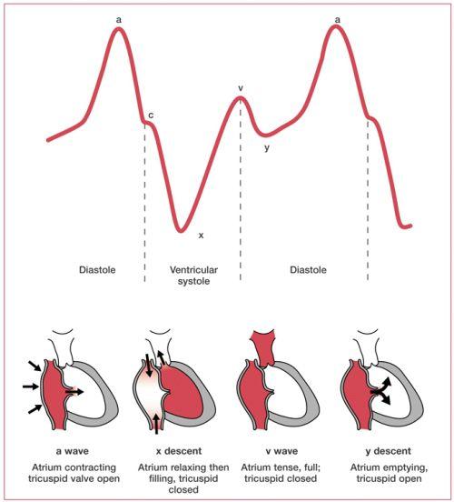 central venous pressure