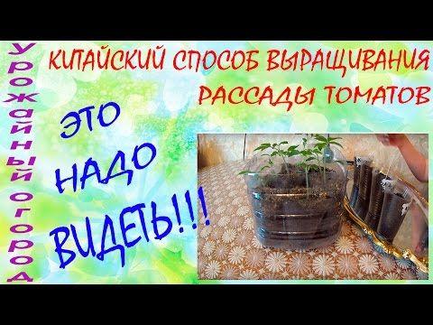 КИТАЙСКИЙ СПОСОБ ВЫРАЩИВАНИЯ  РАССАДЫ ТОМАТОВ!!!ЭТО НАДО ВИДЕТЬ!!! - YouTube