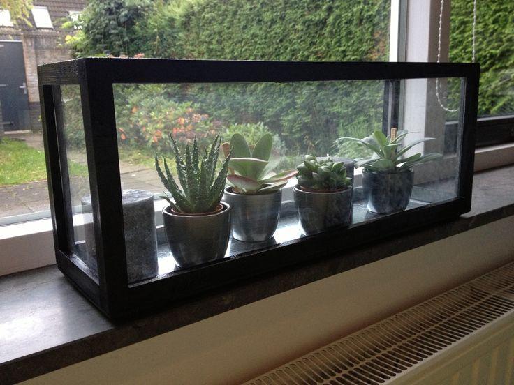 Glazen bak, zwart geschilderd, met vetplantjes erin. #pintratuin