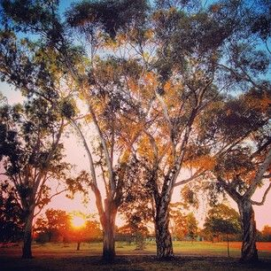 Royal Park, Melbourne | 21 Melbourne Walks That Will Make You Want To Explore The City On Foot