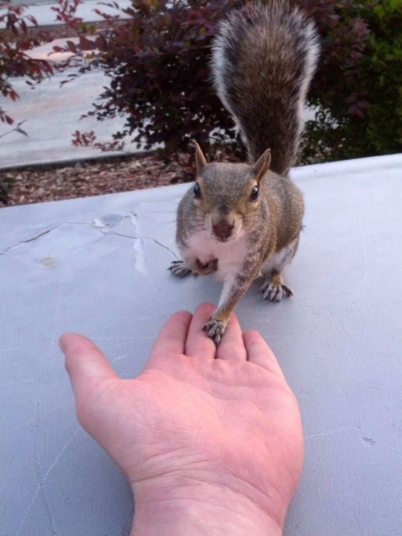 adorable squirrel holding hands with a man