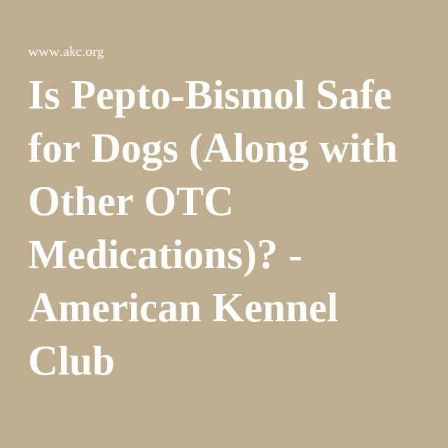 Is Pepto-Bismol Safe for Dogs (Along with Other OTC Medications)? - American Kennel Club