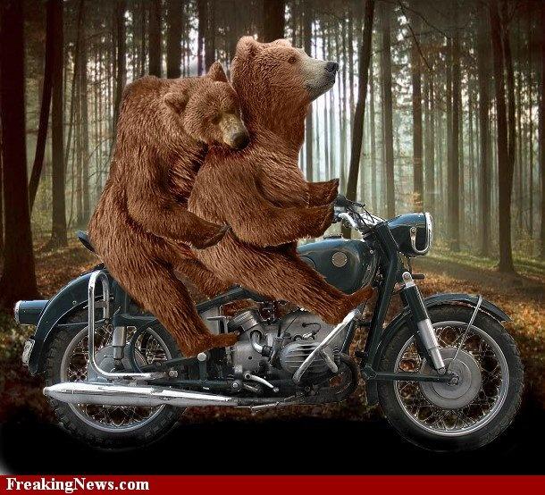 Motorcycle bears