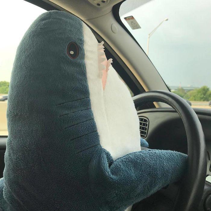 Ikea Shark Plush | Shark plush, Shark meme, Shark
