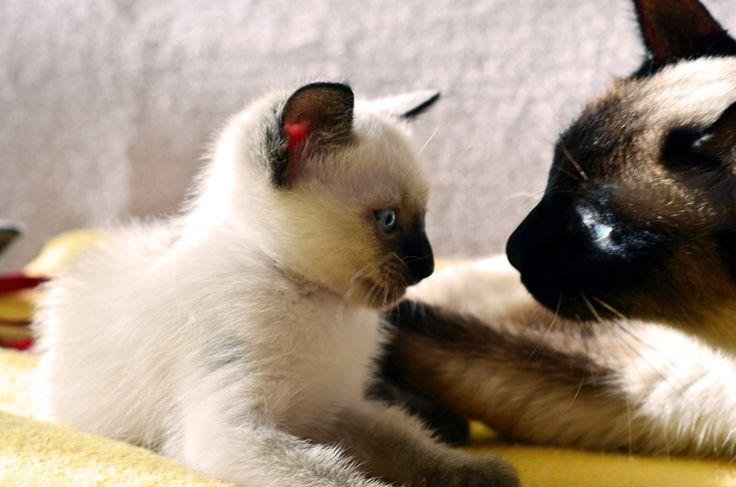 Anne ve yavrusu
