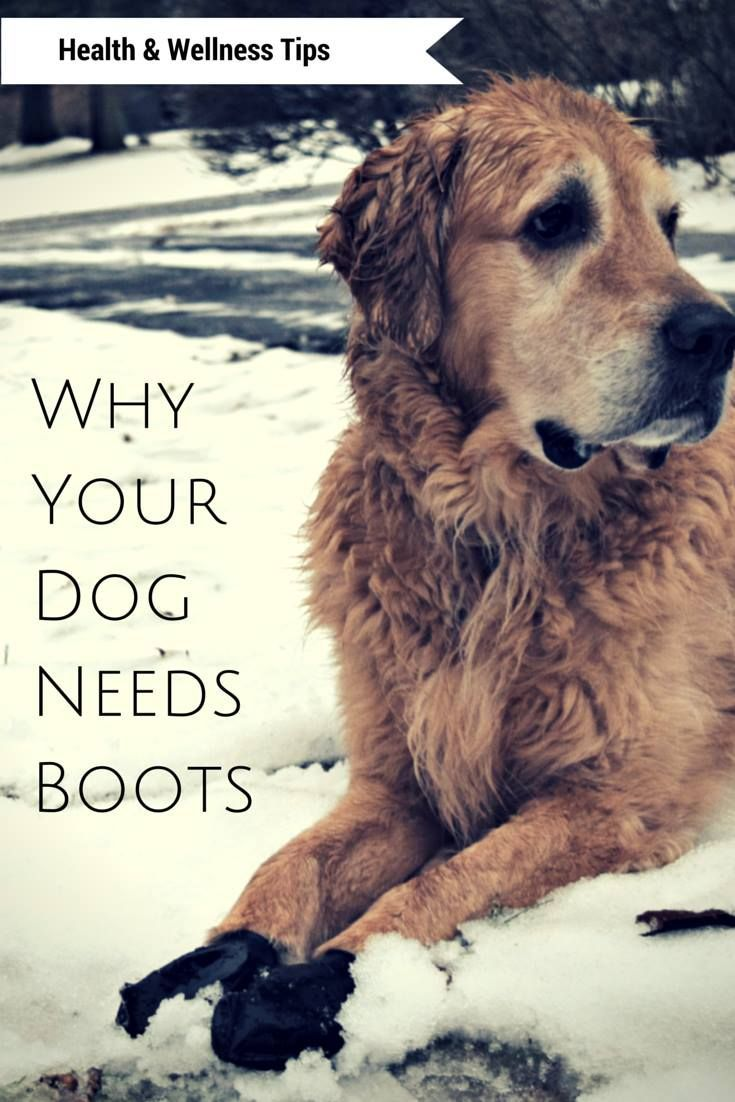 Pawz Dog Boots Review Maximum Winter Protection Other