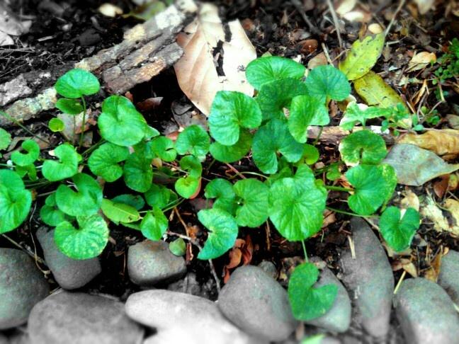 Hojas... Leaves.