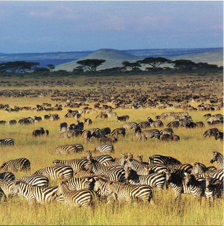 Serengeti National Park   UNESCO-gforpcrossing: Tanzania - Serengeti National Park