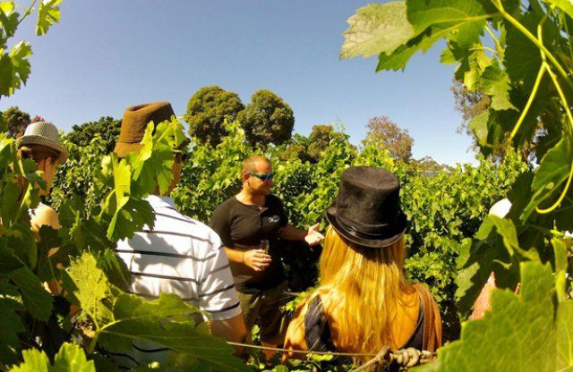 Wine Flies Wine Tours Cape Town | Franschhoek & Stellenbosch Day Tours Cape Winelands 02-January-2016
