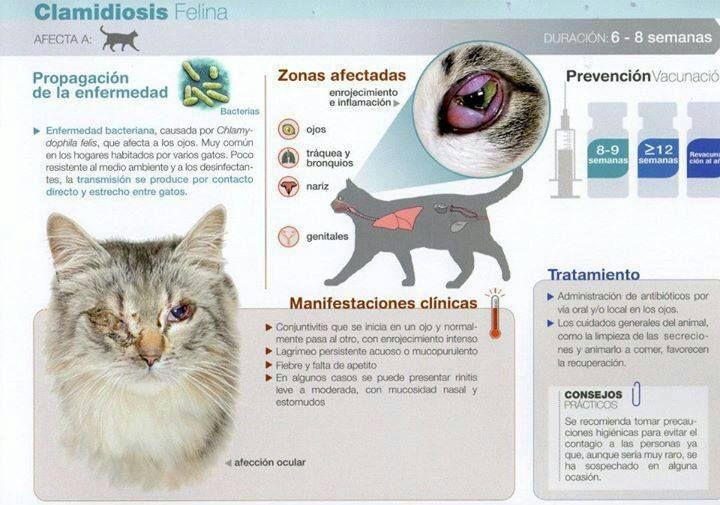 Clamidiosis