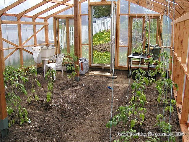 Growing tomatoes in greenhouse tomatoes growing home - Fabriquer serre tunnel ...