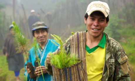 Farmers begin planting saplings to reforest Peru's Choco hills. The carbon captured by the trees will be traded to local benefit.