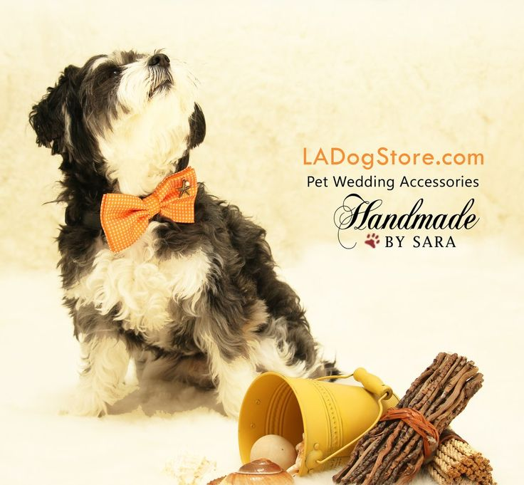 Orange Dog Bow tie attached to dog collar