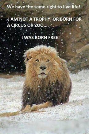 We Have the Same Right to Live Life #BigCatFamily