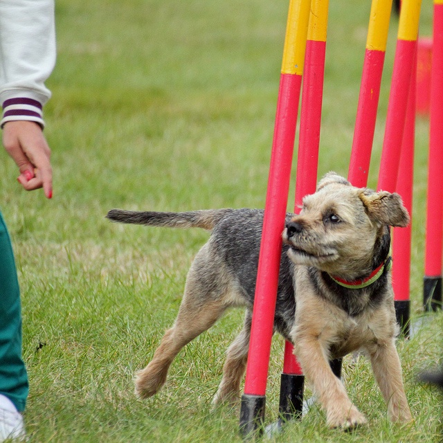 Obedience Training For Dogs In Berkshire